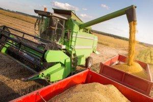 ładowanie ziarna do ciężarówki